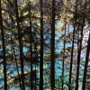 Looking at the lake through a forested area. thumbnail