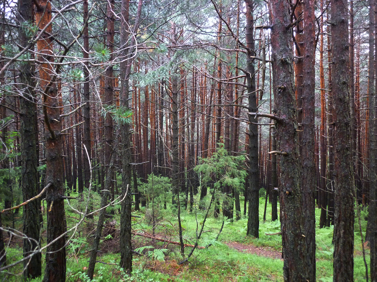 The woods that we walked through as we got close to Telfs looked pretty young.