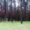 Another view of the woods. thumbnail