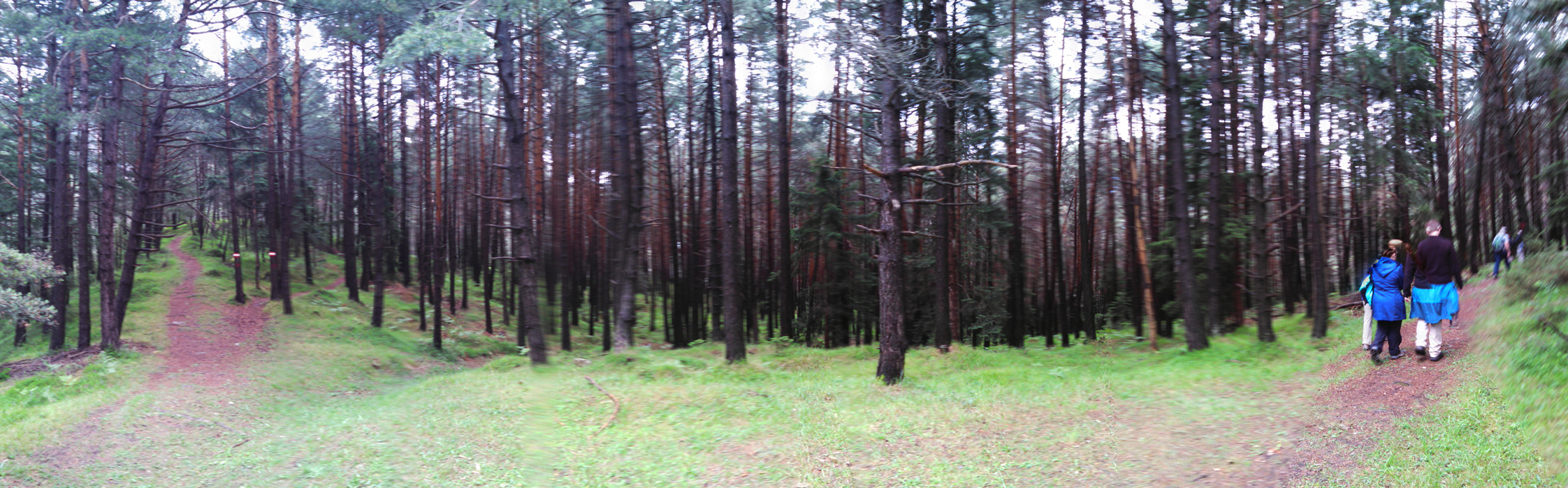 Another view of the woods.