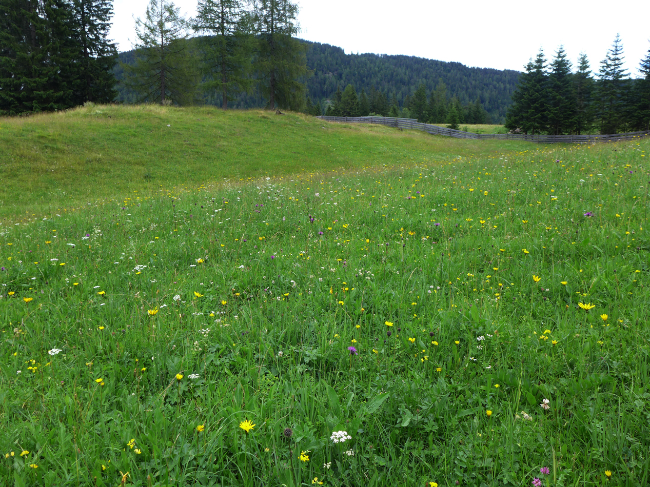 ho hum another pretty meadow.