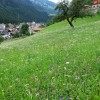 Another view of the pretty meadow on the way to Küblis thumbnail