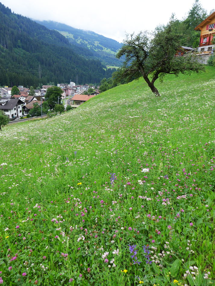 Another view of the pretty meadow on the way to Küblis
