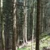 More woods. thumbnail