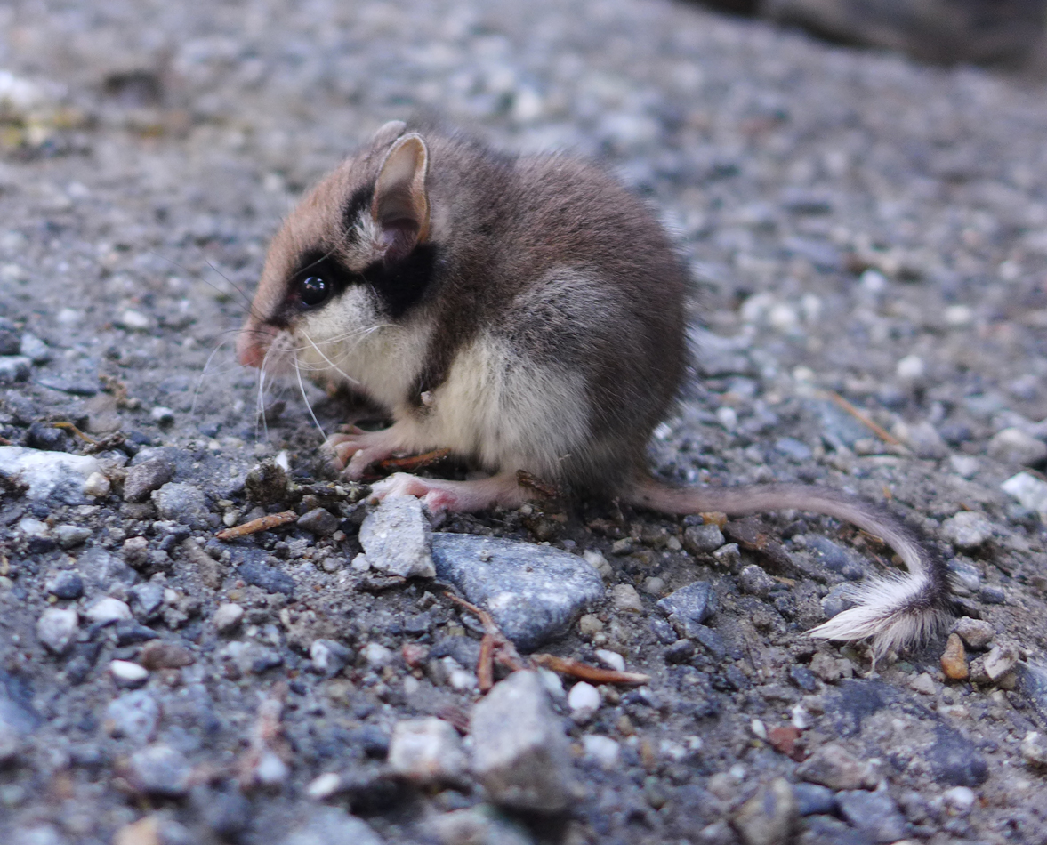 On the way down, we almost stepped on this little mouse.