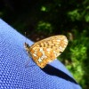 While having lunch, this butterfly rested on Peter's back thumbnail