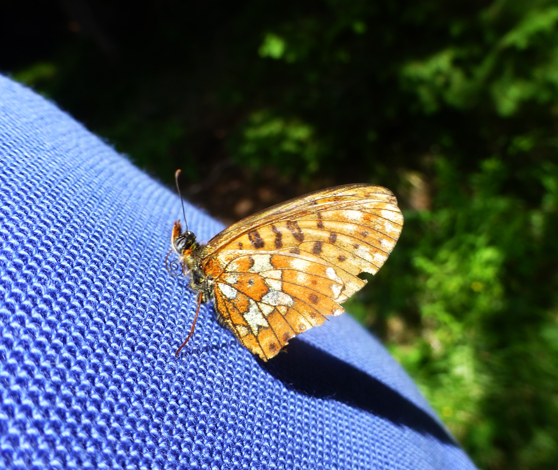 While having lunch, this butterfly rested on Peter's back