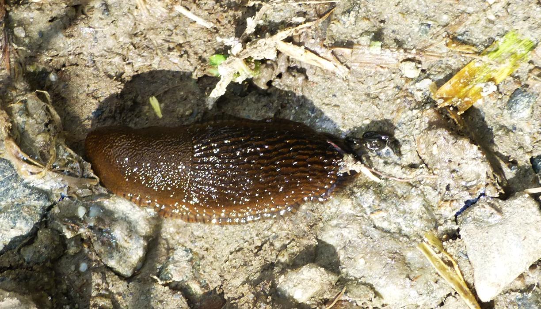 Along the way we ran into another slug.