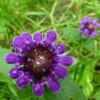 An interesting flower thumbnail