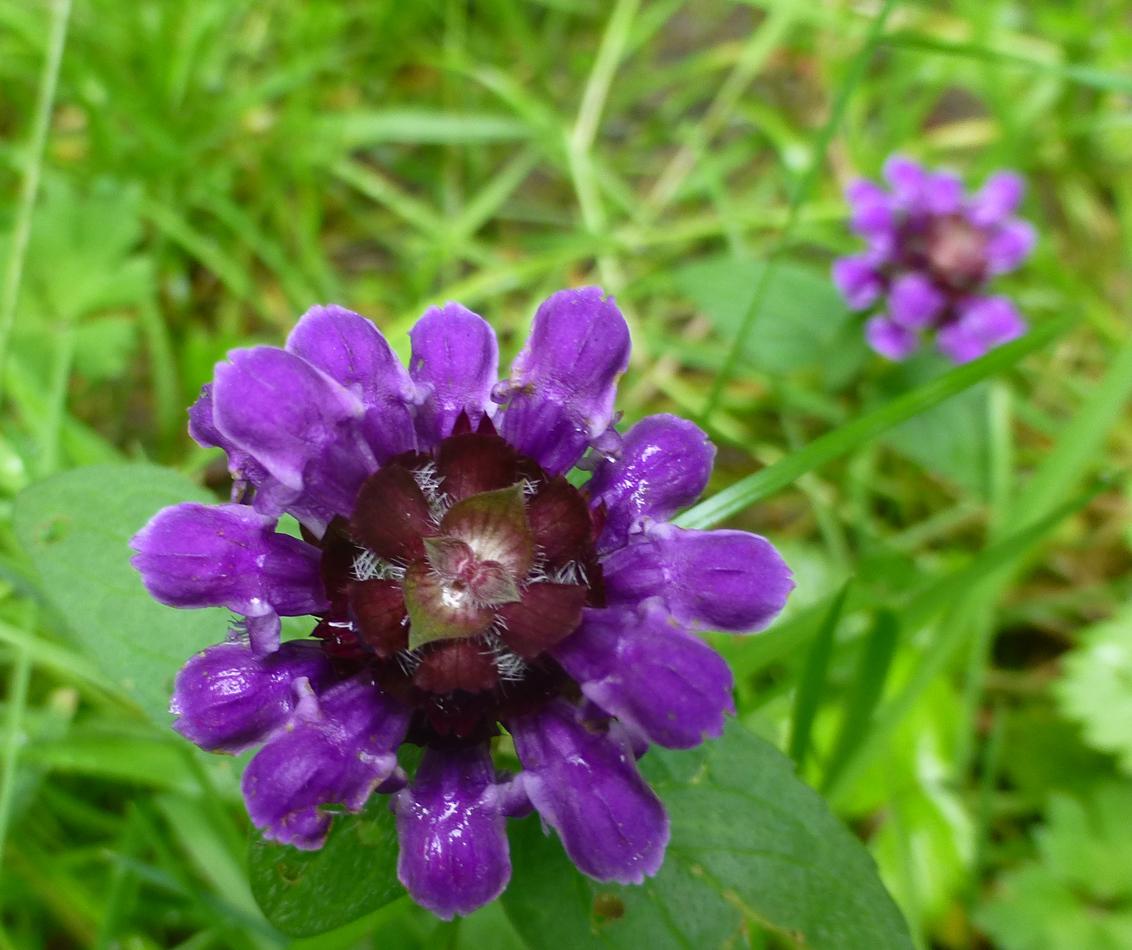 An interesting flower