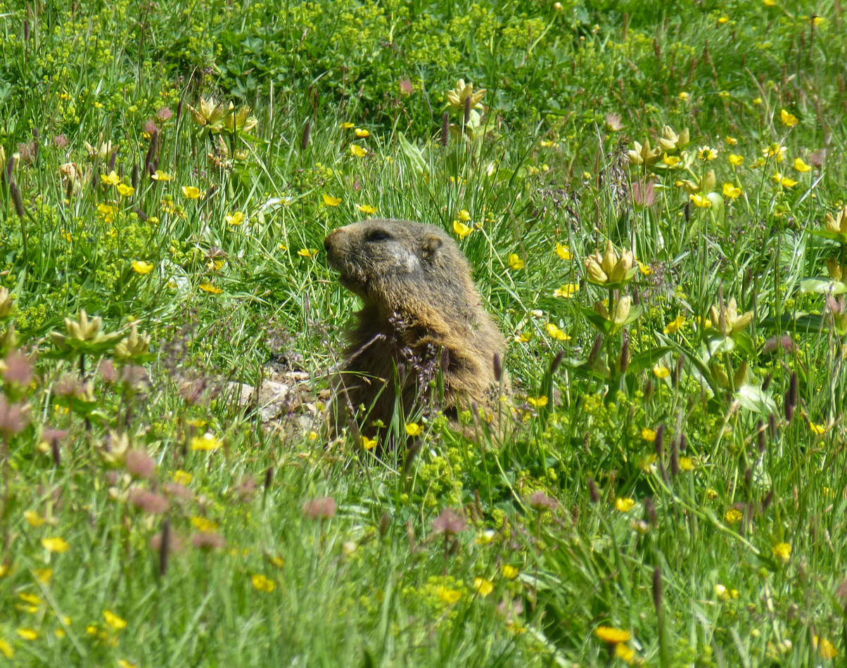 OK, marmots are cute and I had never seen one before.