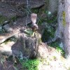 They have the cutest squirrels.  thumbnail