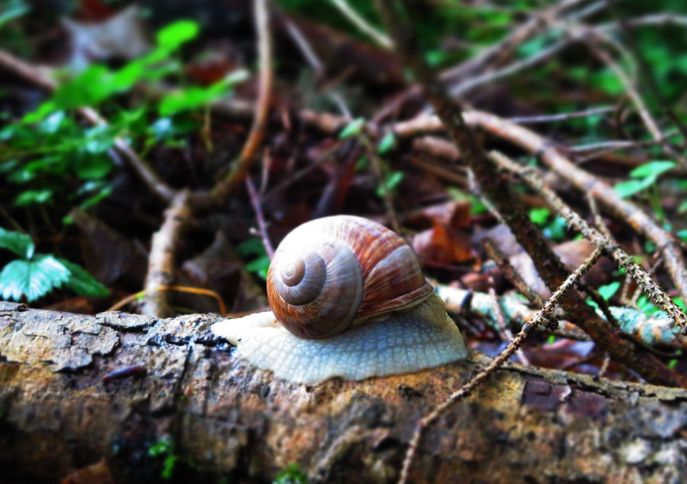 Hiking down to Telfs: snail