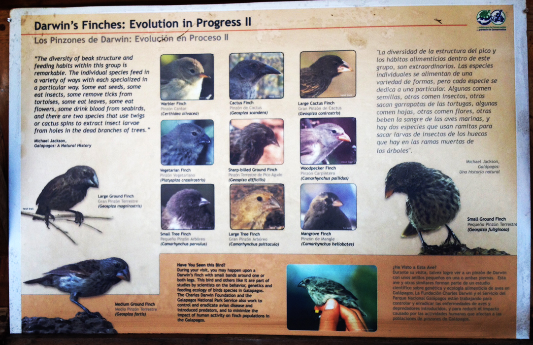 A plaque about finches