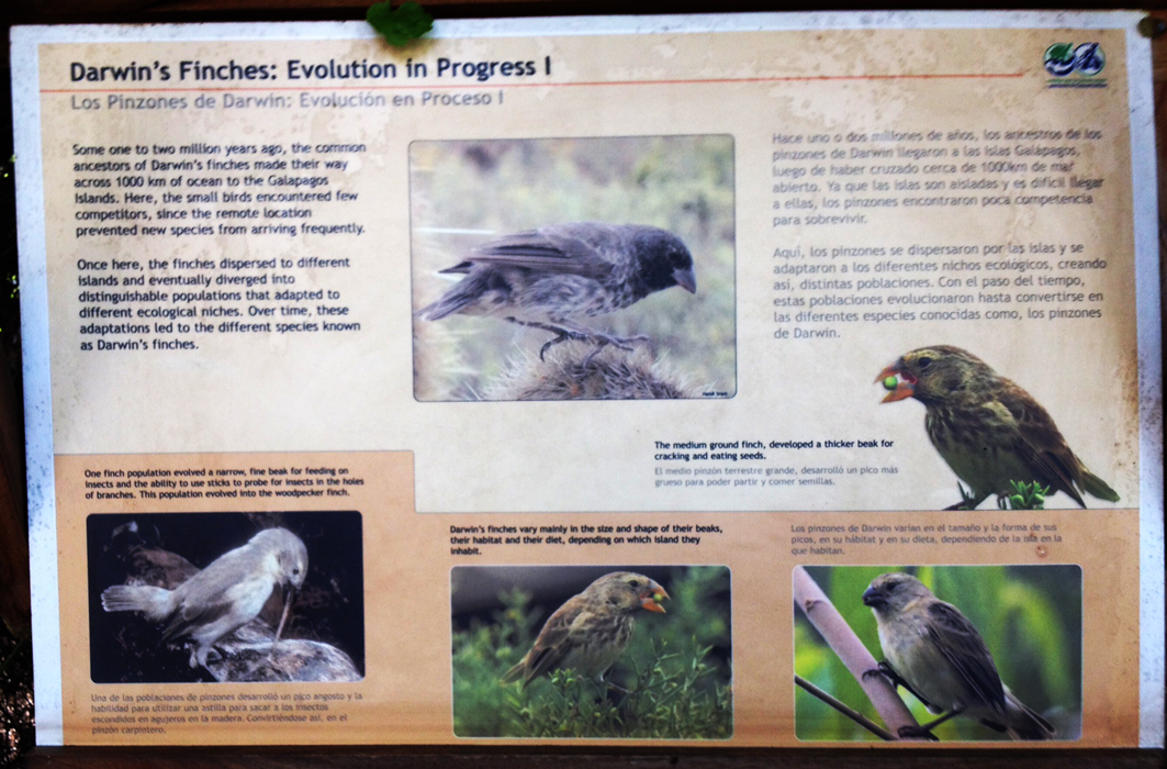 More about finches