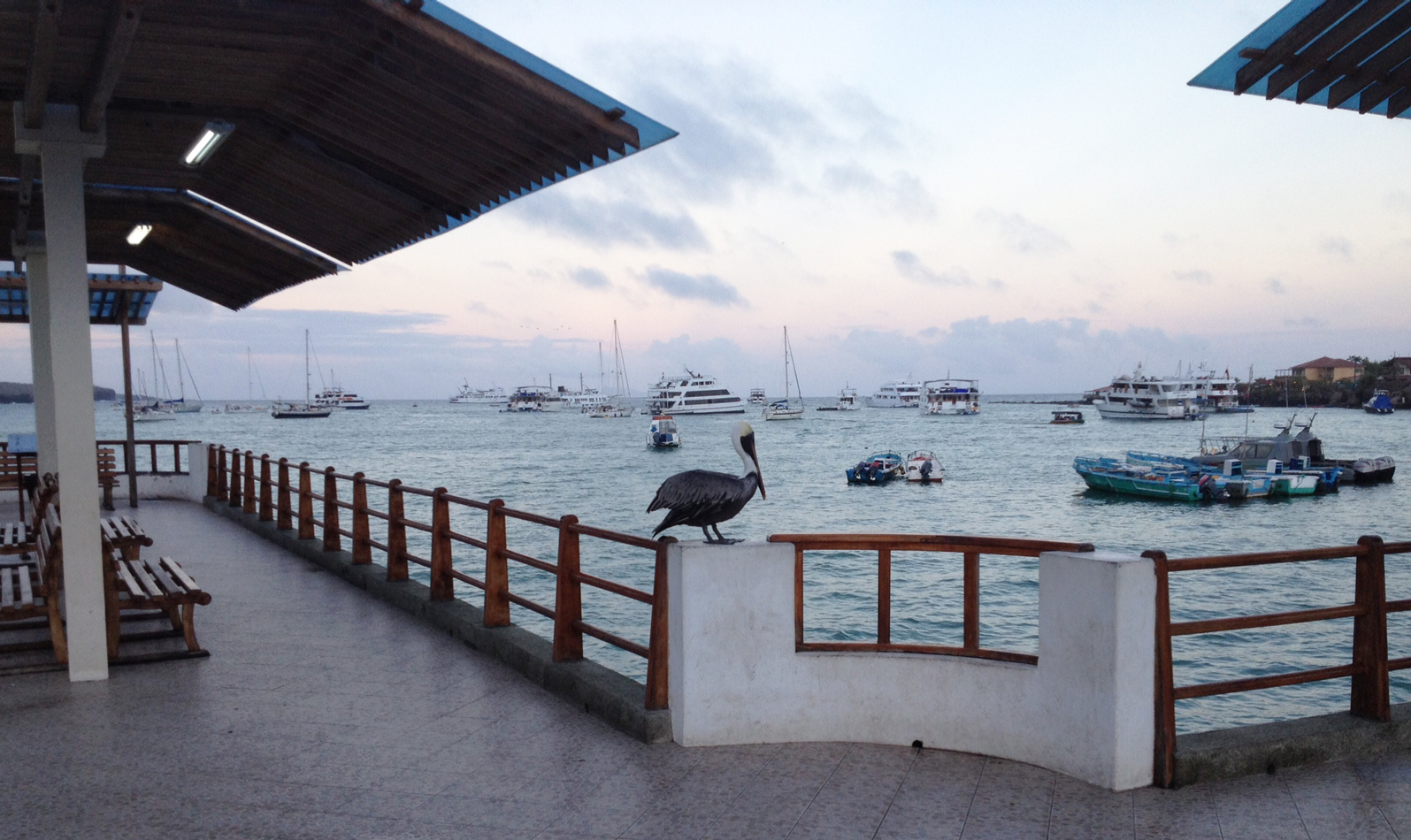 Evening view of the harbor at Puerto Ayora