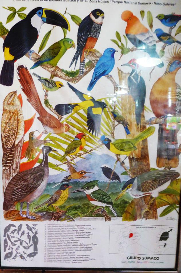 A local bird poster