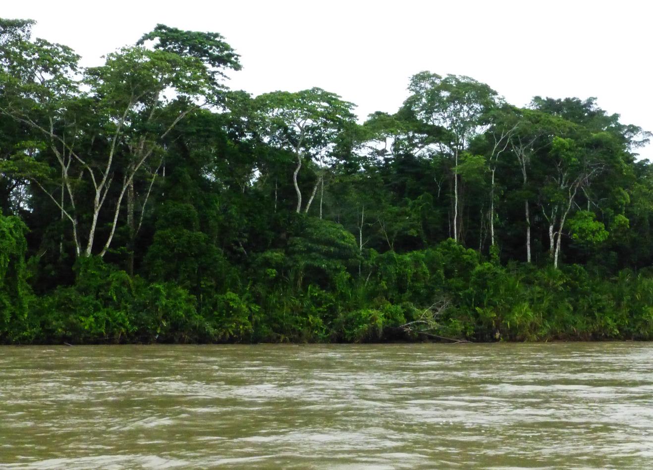The Napo River