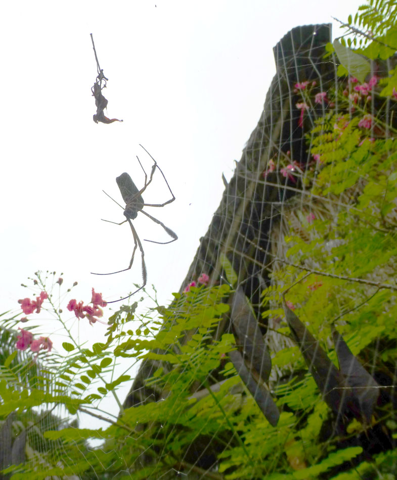 Neat...and large...spider near the lodge.