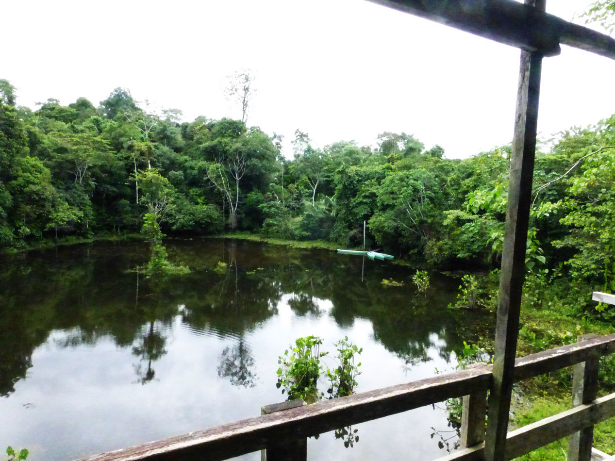 A view of the pond from up on a platform.