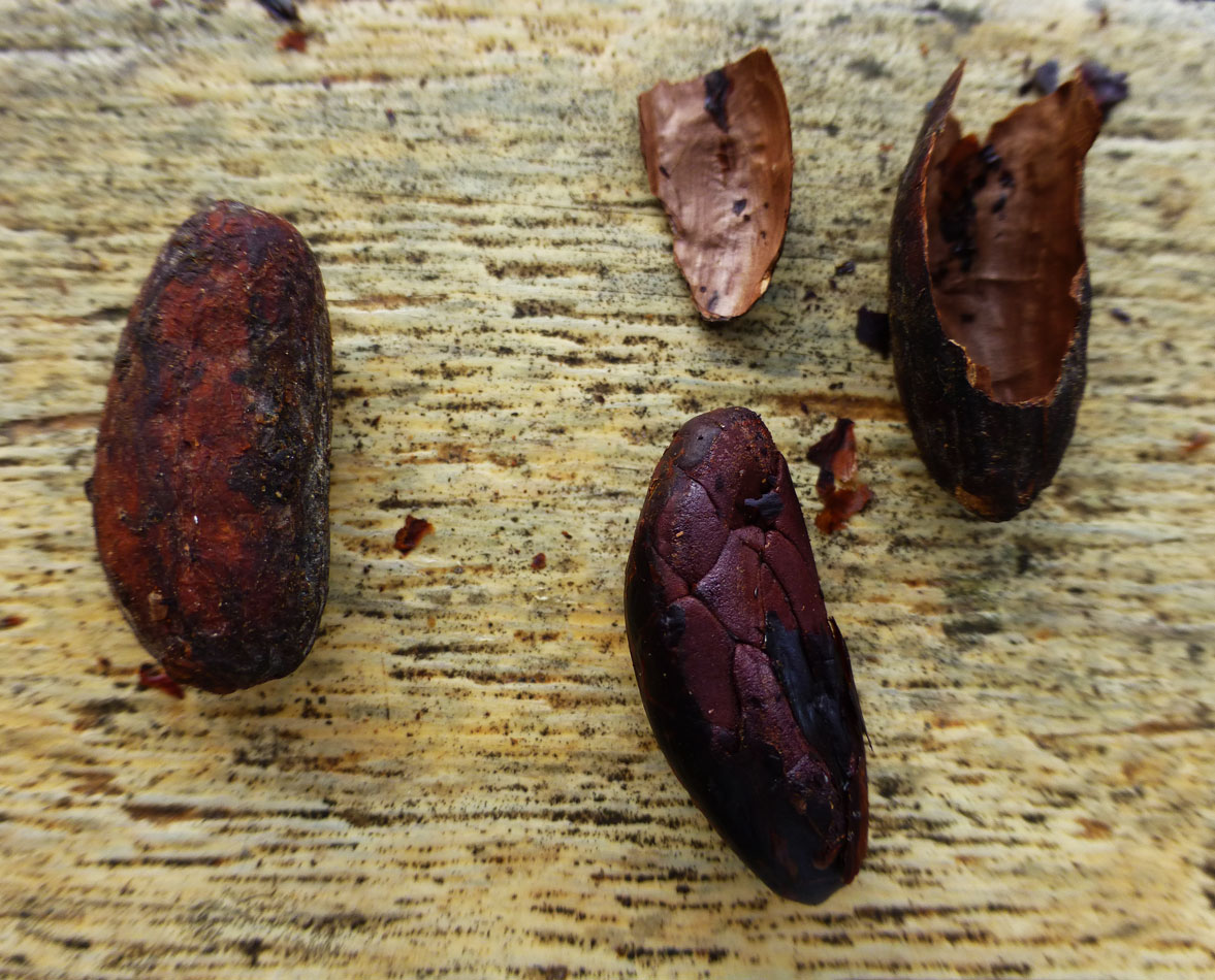 Here is what the cacao beans looked like after they had been roasted.