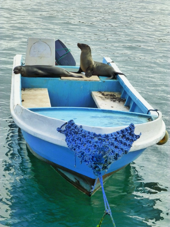 If you leave your boat alone, you are bound to have visitors.