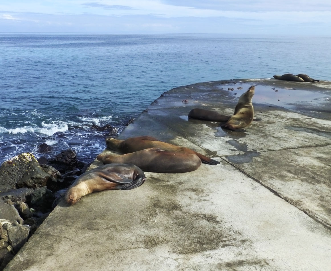 More sea lions lazing around the dock area.