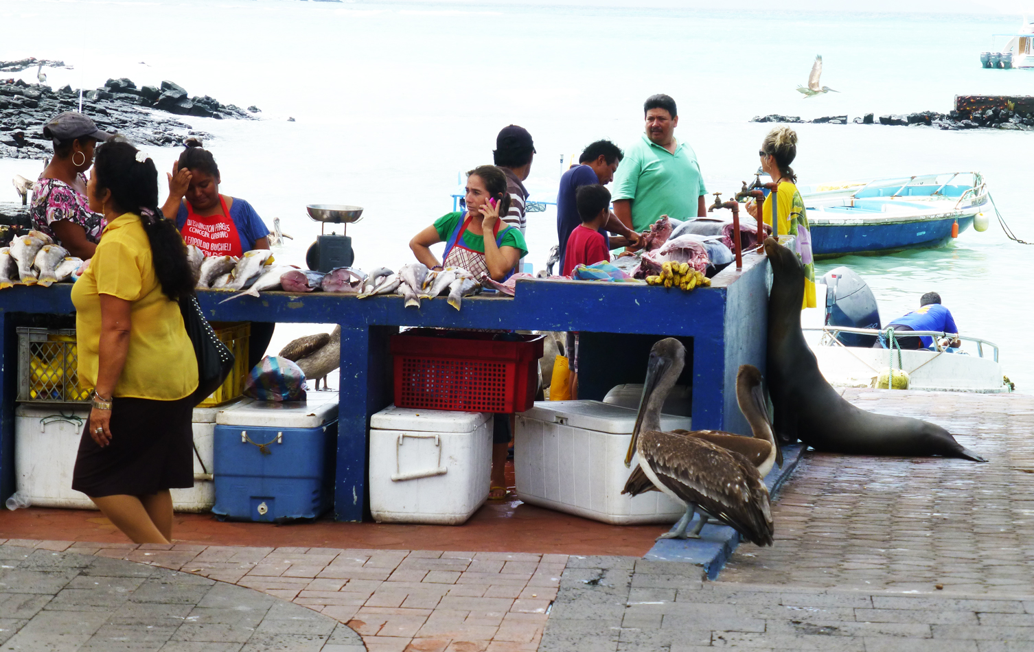 A fish market on the harbor at Puerto Ayora