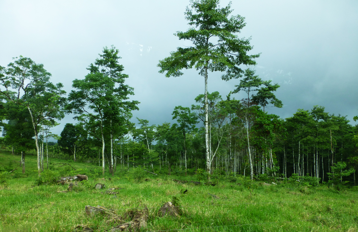 A look at a nearby forest