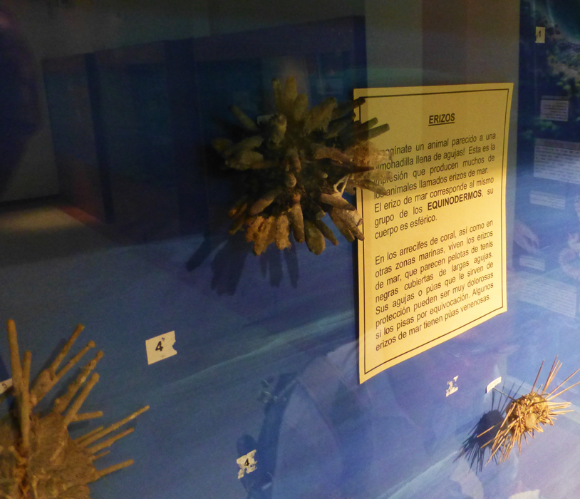 A display on Sea Urchins
