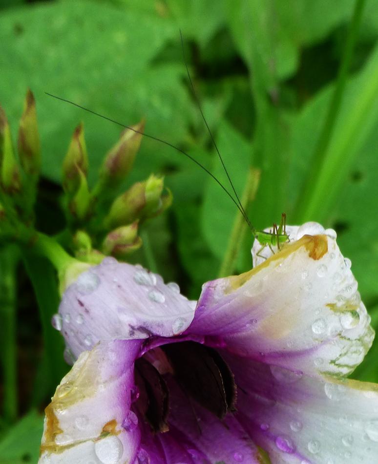 Flower with grasshopper