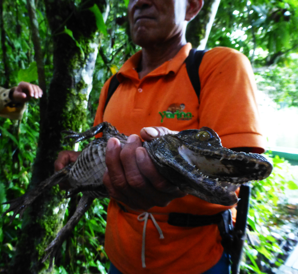 I was the honorary godmother to this little caiman