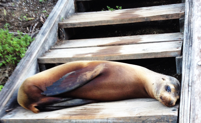 We let the sea lion keep the steps; we walked around him.