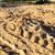 Beach where Galápagos green turtles nest thumbnail