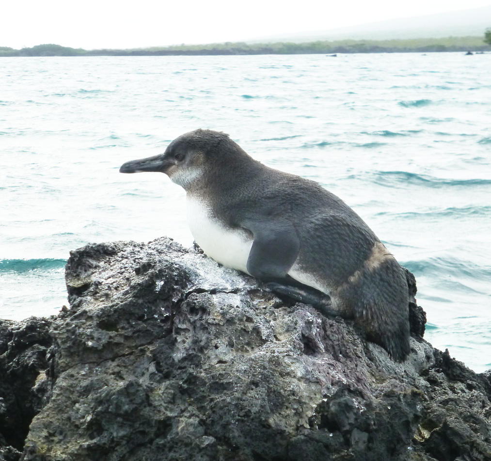 It was amazing to get so close to the birds along the shore.