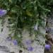P1030079_Basilica_of_St_John_Flowers_950 thumbnail