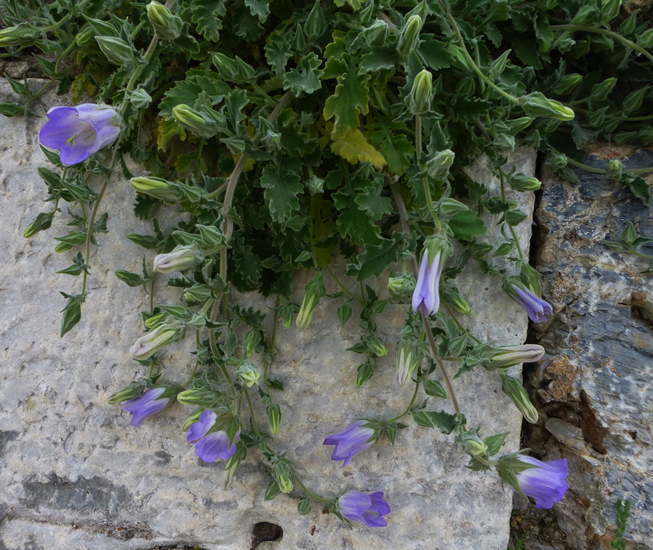 P1030079_Basilica_of_St_John_Flowers_950