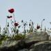 P1030082_Basilica_of_St_John_Flowers_950 thumbnail