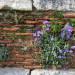 P1030085_Basilica_of_St_John_Flowers_950 thumbnail