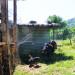 P1030383_rest_turkeys_950 thumbnail