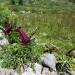 P1030395_Hike_plants_950 thumbnail