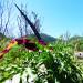 P1030398_Hike_plants_950 thumbnail