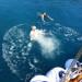 P1030421_boat_swim_P_950 thumbnail