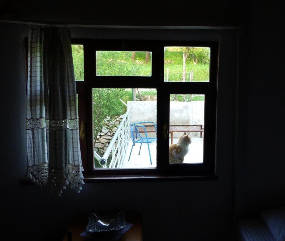P1030965_HomeStay_Cat_950