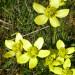P1040105_cave_nearbyflowers_950 thumbnail