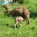 P1030536_Kayakoy_camel_950 thumbnail
